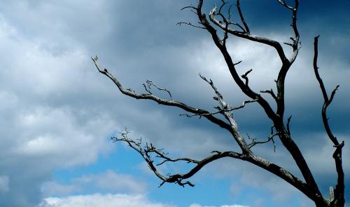 Toter Baum mit Himmel