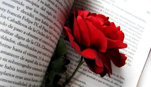 Rote Rose in einem Buch